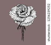 blossoming flower resembling... | Shutterstock .eps vector #1256239252