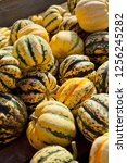 sweet dumpling squash    small...   Shutterstock . vector #1256245282