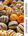 sweet dumpling squash    small...   Shutterstock . vector #1256245285