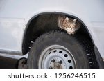 Stock photo stray street cat on car wheel homeless cat hiding looking for warmth in cold weather life in 1256246515