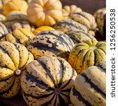 sweet dumpling squash    small...   Shutterstock . vector #1256250538