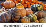 Musquee De Provence Pumpkins In ...