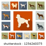 dog breeds flat icons in set...   Shutterstock .eps vector #1256260375
