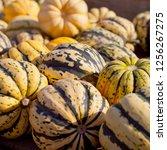 sweet dumpling squash    small...   Shutterstock . vector #1256267275