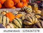 sweet dumpling squash    small...   Shutterstock . vector #1256267278