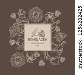 background with echinacea ... | Shutterstock .eps vector #1256282425