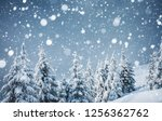 frozen white spruces on a... | Shutterstock . vector #1256362762