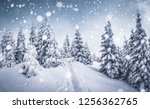 frozen white spruces on a... | Shutterstock . vector #1256362765