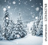 frozen charming spruces on a... | Shutterstock . vector #1256362768