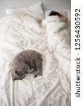 view of a modern bedroom... | Shutterstock . vector #1256430592