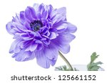Blue Flower Isolated On A Whit...