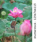 pink lotus flower in the nature | Shutterstock . vector #1256766115