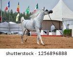 the arabian horse | Shutterstock . vector #1256896888