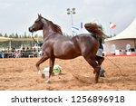 the arabian horse | Shutterstock . vector #1256896918