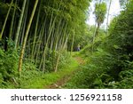 footpath in the rainforest. on... | Shutterstock . vector #1256921158