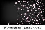 nice sakura blossom isolated...   Shutterstock .eps vector #1256977768