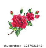 Red Rose Branch With Buds And...
