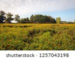 large field with a  lot of... | Shutterstock . vector #1257043198