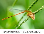 Stock photo close up of a dragonfly on the leaf beautiful nature scene cost up or macro picture of dragonfly 1257056872