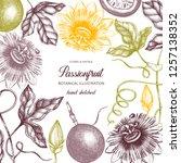 purple passionfruit hand drawn... | Shutterstock .eps vector #1257138352