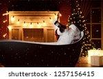 bad santa claus drinking... | Shutterstock . vector #1257156415