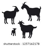 Goats Isolated On White  Hand...