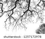realistic oak tree silhouette ...   Shutterstock .eps vector #1257172978
