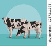 cows farm animal | Shutterstock .eps vector #1257211375