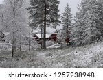 snowy forest woods   cold and... | Shutterstock . vector #1257238948