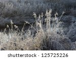 grass covered with frost in... | Shutterstock . vector #125725226