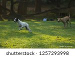 dog jump at park  | Shutterstock . vector #1257293998