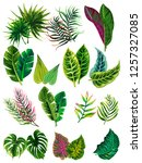 set of vector tropical leaves. | Shutterstock .eps vector #1257327085