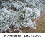 frost and snow on a pine branch   Shutterstock . vector #1257431908