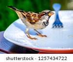 nice sparrow on a dish   photo | Shutterstock . vector #1257434722