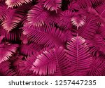 pink leafs of fern with...   Shutterstock . vector #1257447235