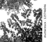 fresh leaves isolated black and white - stock photo