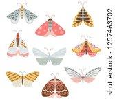 beautiful  multicolored...   Shutterstock .eps vector #1257463702