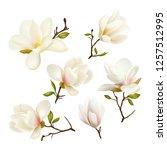 magnolia. beautiful. gentle.... | Shutterstock .eps vector #1257512995
