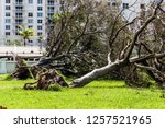 Uprooted Trees At The Park...