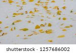 we got our first snow of the... | Shutterstock . vector #1257686002
