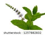 peppermint. mint flower... | Shutterstock . vector #1257882832