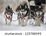 Dog Team Is Running In The Sno...