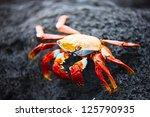 Sally Lightfoot Crab On A Blac...