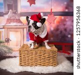 french bulldog posing in santa... | Shutterstock . vector #1257956368
