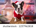 french bulldog posing in santa... | Shutterstock . vector #1257962818