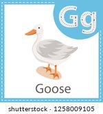 illustrator of goose bird | Shutterstock .eps vector #1258009105