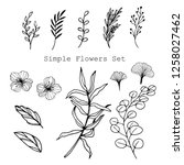simple flowers set. collection... | Shutterstock .eps vector #1258027462