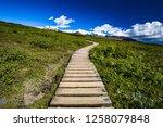 wooden trail  boardwalk  in... | Shutterstock . vector #1258079848
