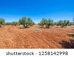 landscape with field of green... | Shutterstock . vector #1258142998