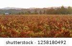 fall foliage  autumn landscape... | Shutterstock . vector #1258180492
